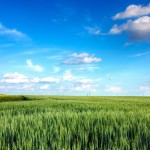Blue Skies and Green Fields